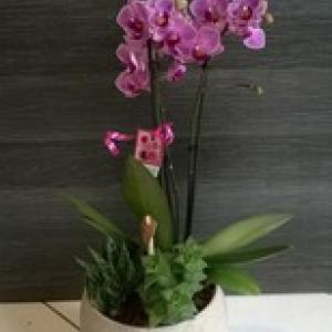 COMPOSITION ORCHIDEE + PLANTES GRASSES