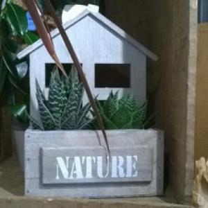 PLANTES GRASSES NATURE
