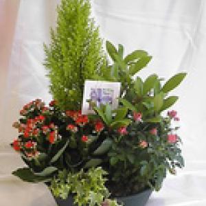 PLANTES D'EXTERIEUR pour fleurir vos tombes ou pour une cérémonie d'obsèques